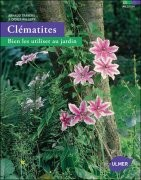 Clématites