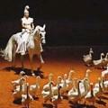 Loungta, les chevaux de vent de Zingaro