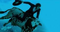 Thomas Fersen - Un coup de queue de vache