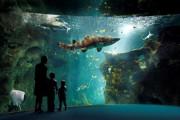 Récifs de corails : des constructions millénaires en péril