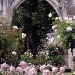 Ruine de l'église dans les roses