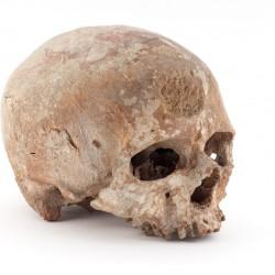 Cro Magnon dit le vieillard, paleolithique superieur, France - Musée de l'homme