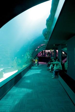 L'univers Lego débarque à l'Aquarium de Paris